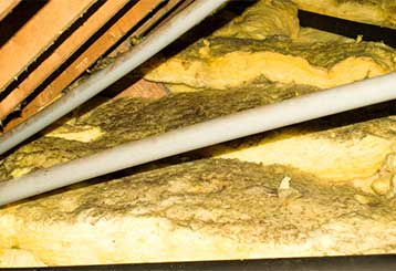 Attic Insulation Removal | Attic Cleaning Laguna Beach, CA