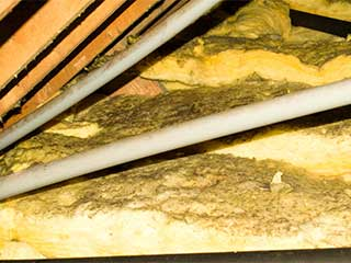 Insulation Removal Services | Attic Cleaning Laguna Beach, CA
